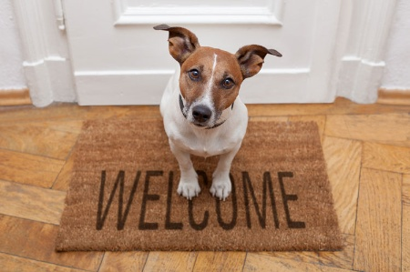 Curious dog sitting on welcome door mat