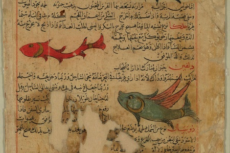 Fish from medieval scientific manuscript