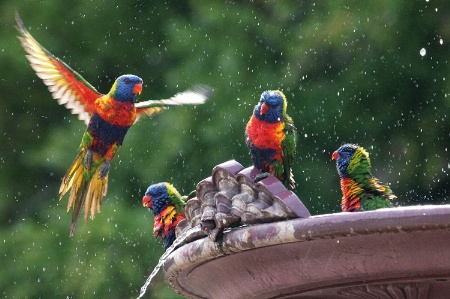 Birds bathing in fountain
