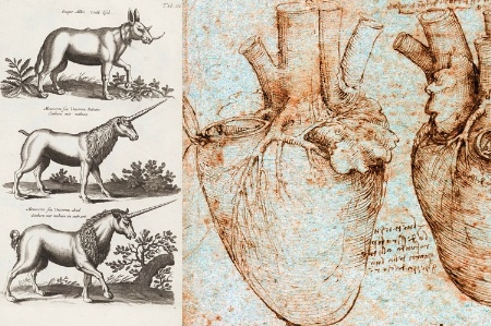 Sketches of unicorns and human heart