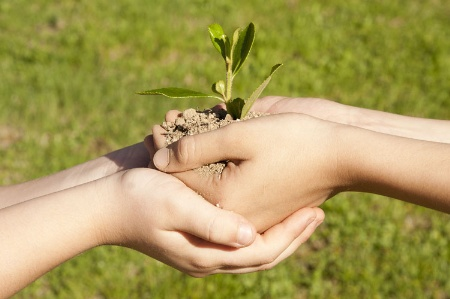 Children's hands holding sapling