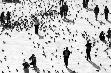 People and birds