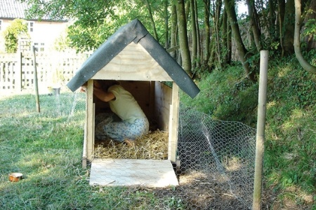 Woman repairing duck house