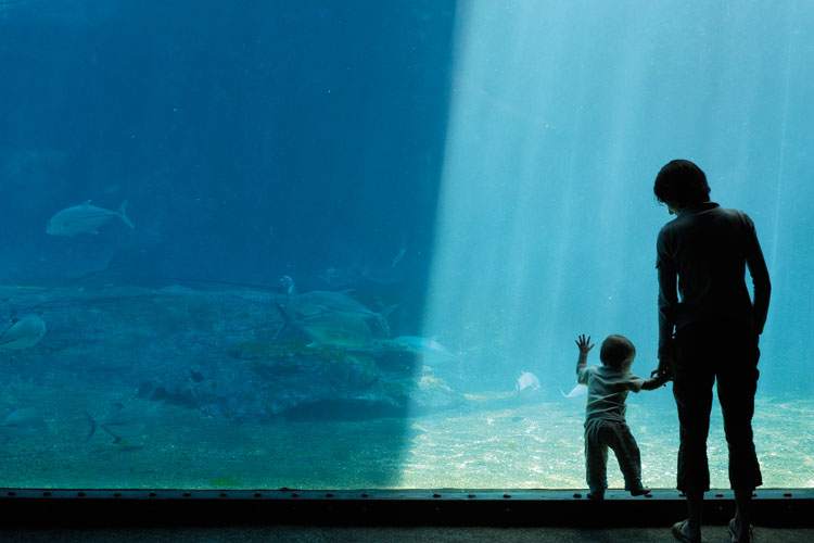 A woman and a child in an aquarium