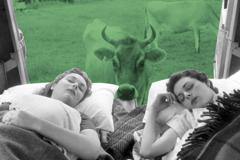 cow-peering-at-women-asleep