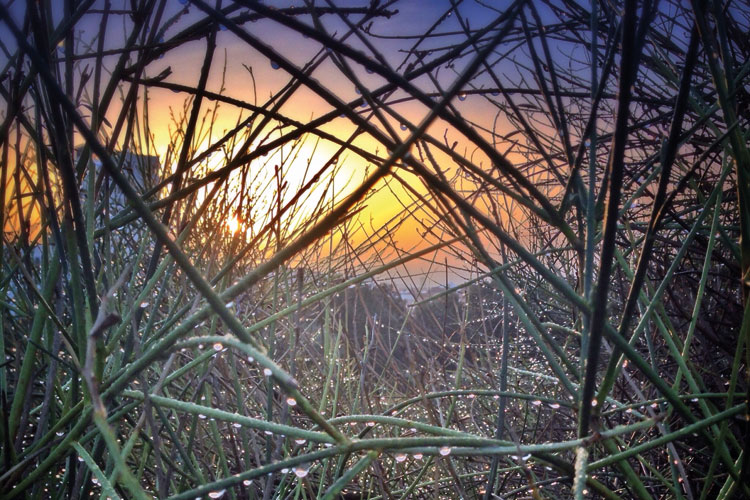 Dew drops on twigs at sunrise