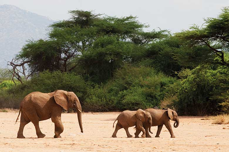 Elephant with baby elephants