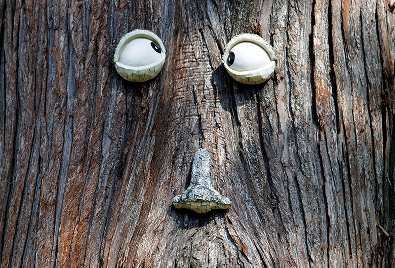 Googly eyes on a tree