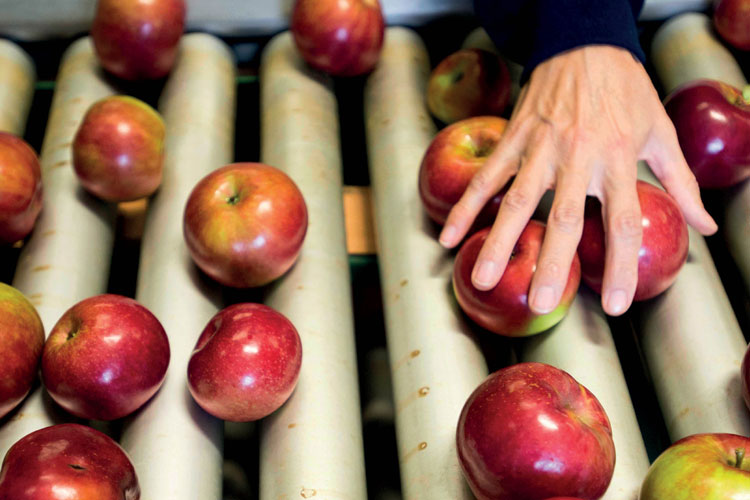 Hand reaching for apple