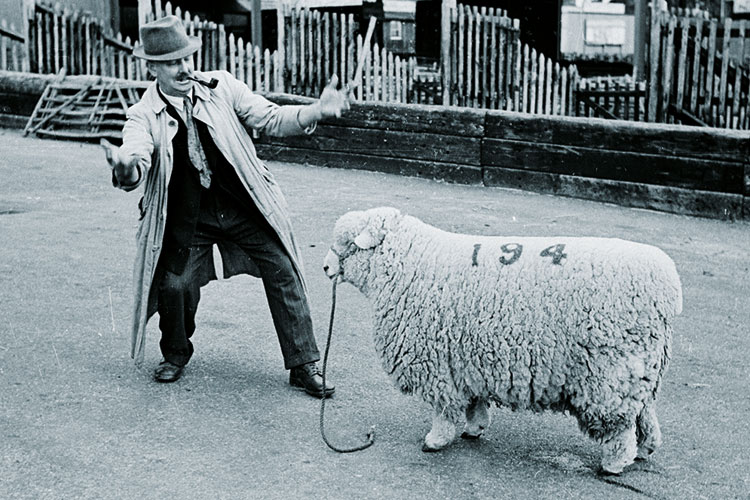 Man standing in front of sheep