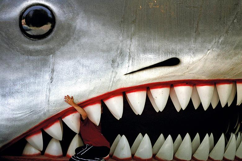 Person in between sharks teeth