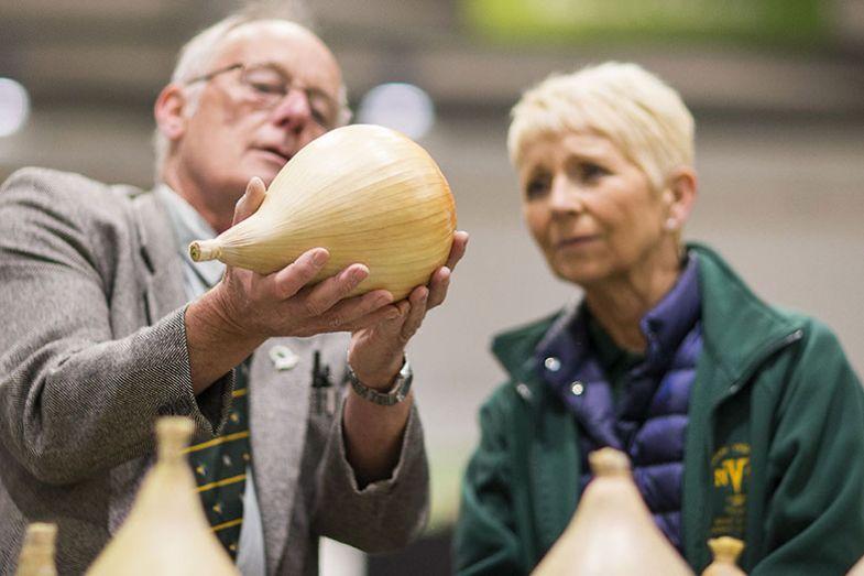 onion-examiner