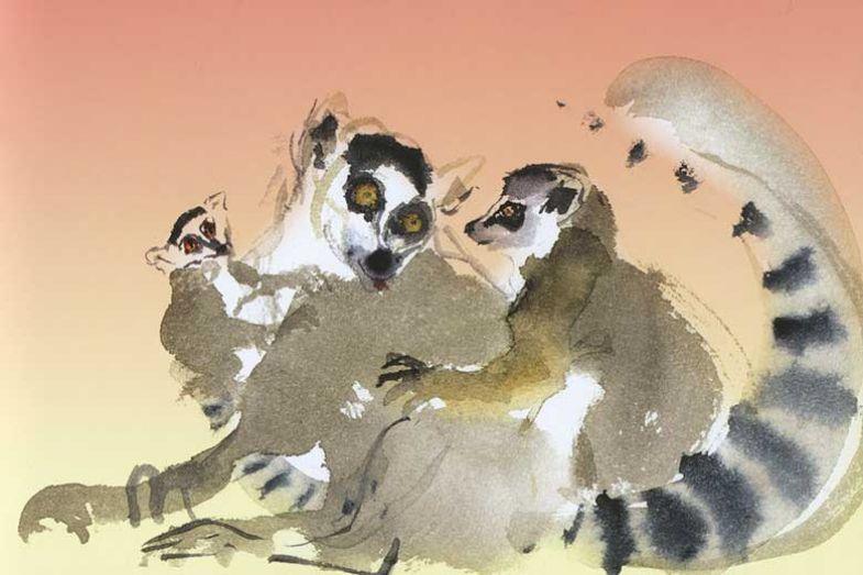 lemursorange