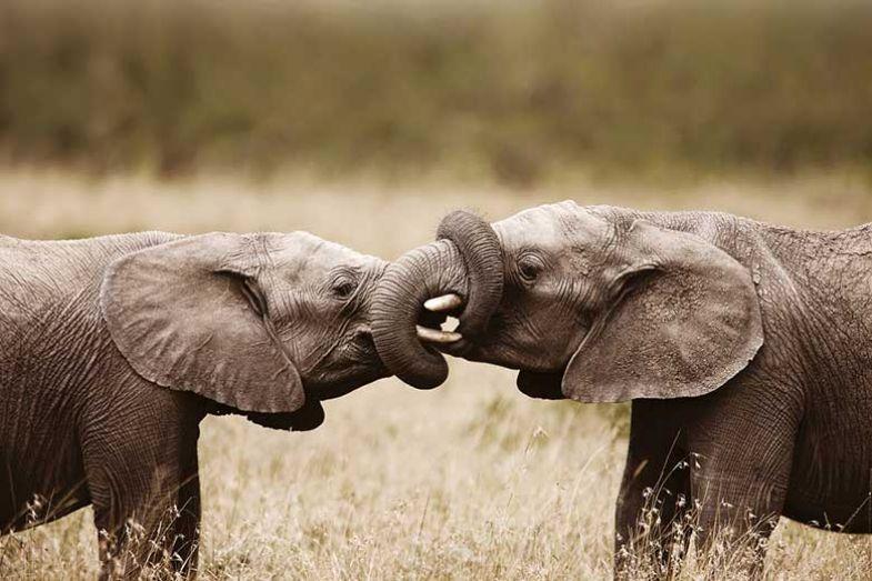 african-elephants-huawei-collaboration