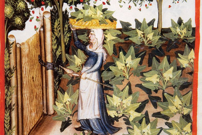 Edited image from Tacuinum Sanitatis, Medieval Health Handbook, dated before 1400
