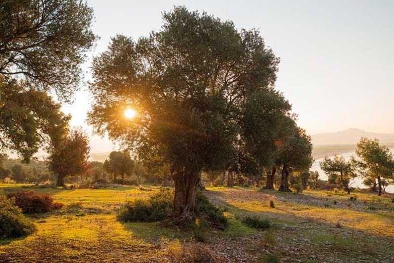sunset_tree_istock