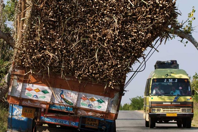 Truck loaded with wood in India