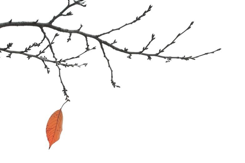 Branch with one leaf
