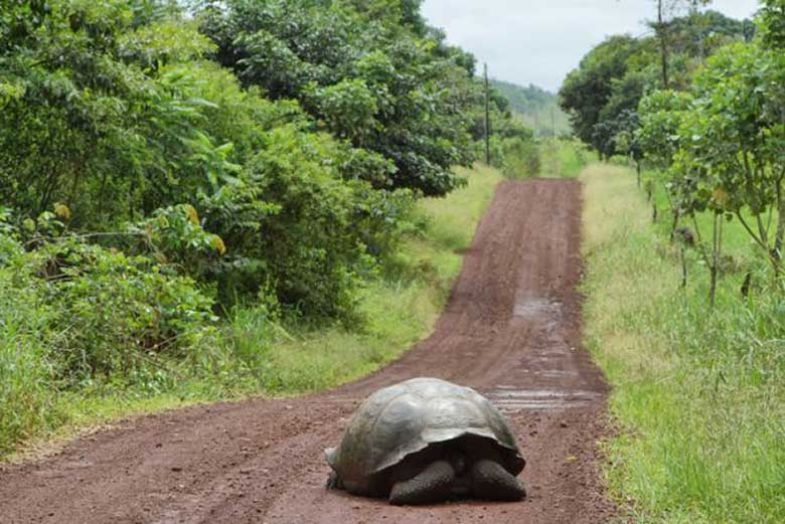 tortoise-on-track