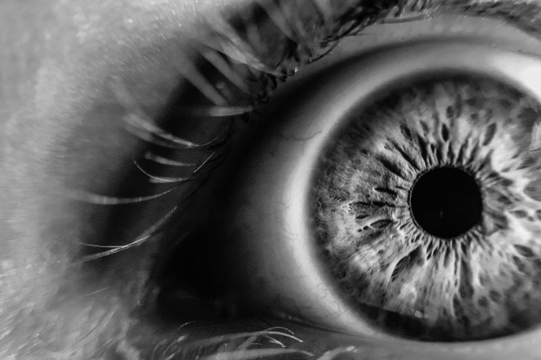 Seeing The Brain Through The Eyes Times Higher Education The