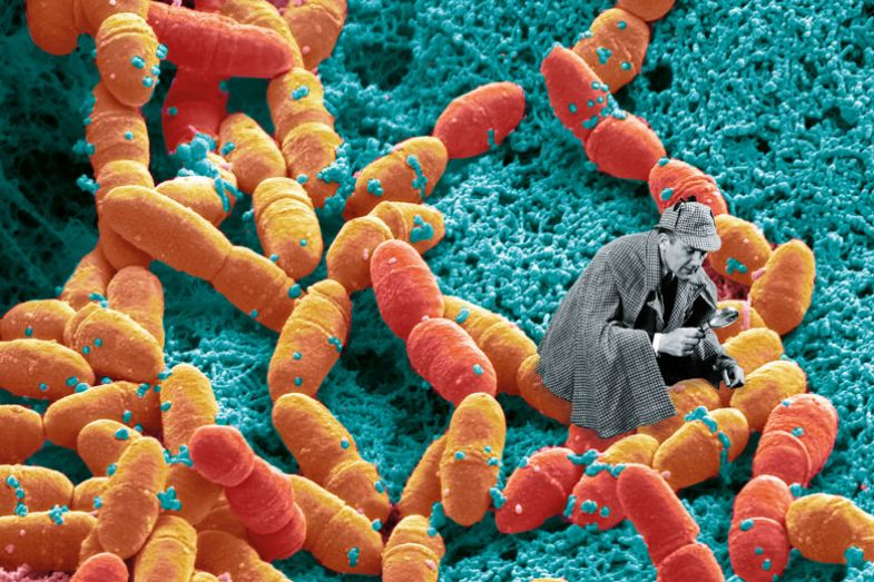Detective with streptococcus mutans