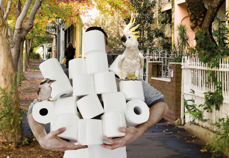 Person holding multiple rolls of  toilet rolls with a parrot and a bird on them