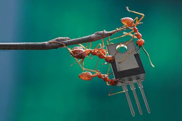 Ants on a twig