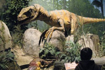 Person viewing dinosaur exhibit in museum