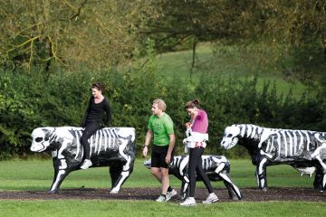 skeleton-cows