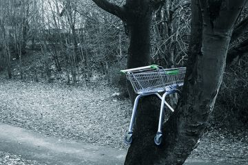 An abandoned supermarket trolley stuck in a tree