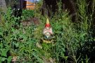 Overgrown garden with gnome