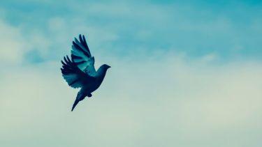Bird flying freely