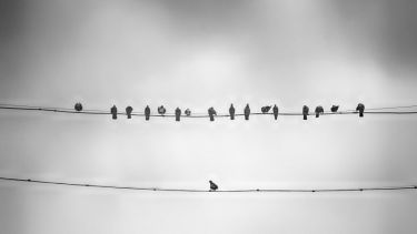 Lone bird on telephone wire