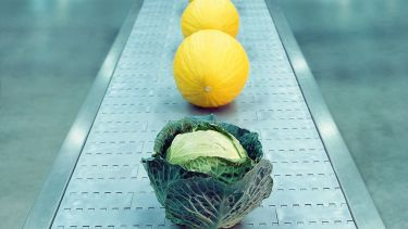 Cabbage on conveyor belt with melons