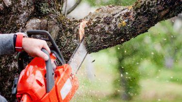 Chainsaw cutting tree branch