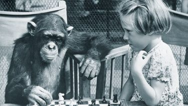 Little girl plays chess with a chimpanzee