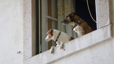 dogs keep watch