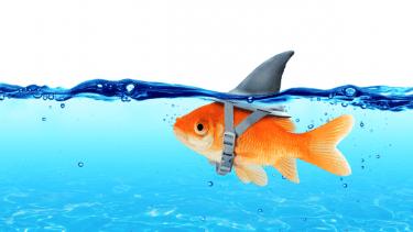shark, fish, lie, misleading, misled,