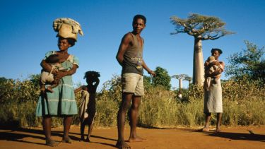 Group of people standing near baobab trees, Madagascar