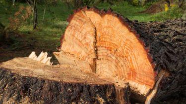 Tree chopped down