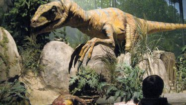Person viewing dinosaur exhibit in museum