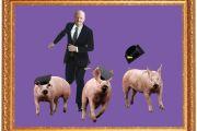 David Willetts chasing three graduating pigs