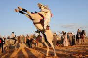 Saudi man riding horse, Tabuk, Saudi Arabia