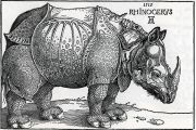 Woodcut of a rhinoceros from 1515