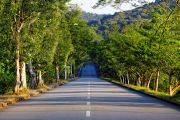 Tree-lined road stretching to horizon