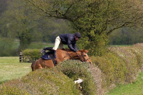 Horse and jockey crashing into hedge