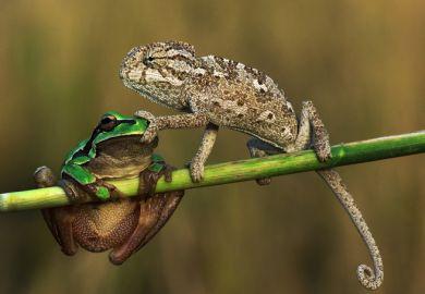 Chameleon and frog