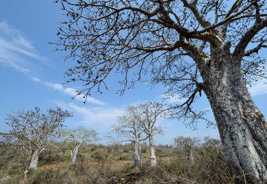 Angola countryside