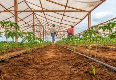 Angolan farm