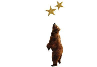 Bear reaching for golden stars